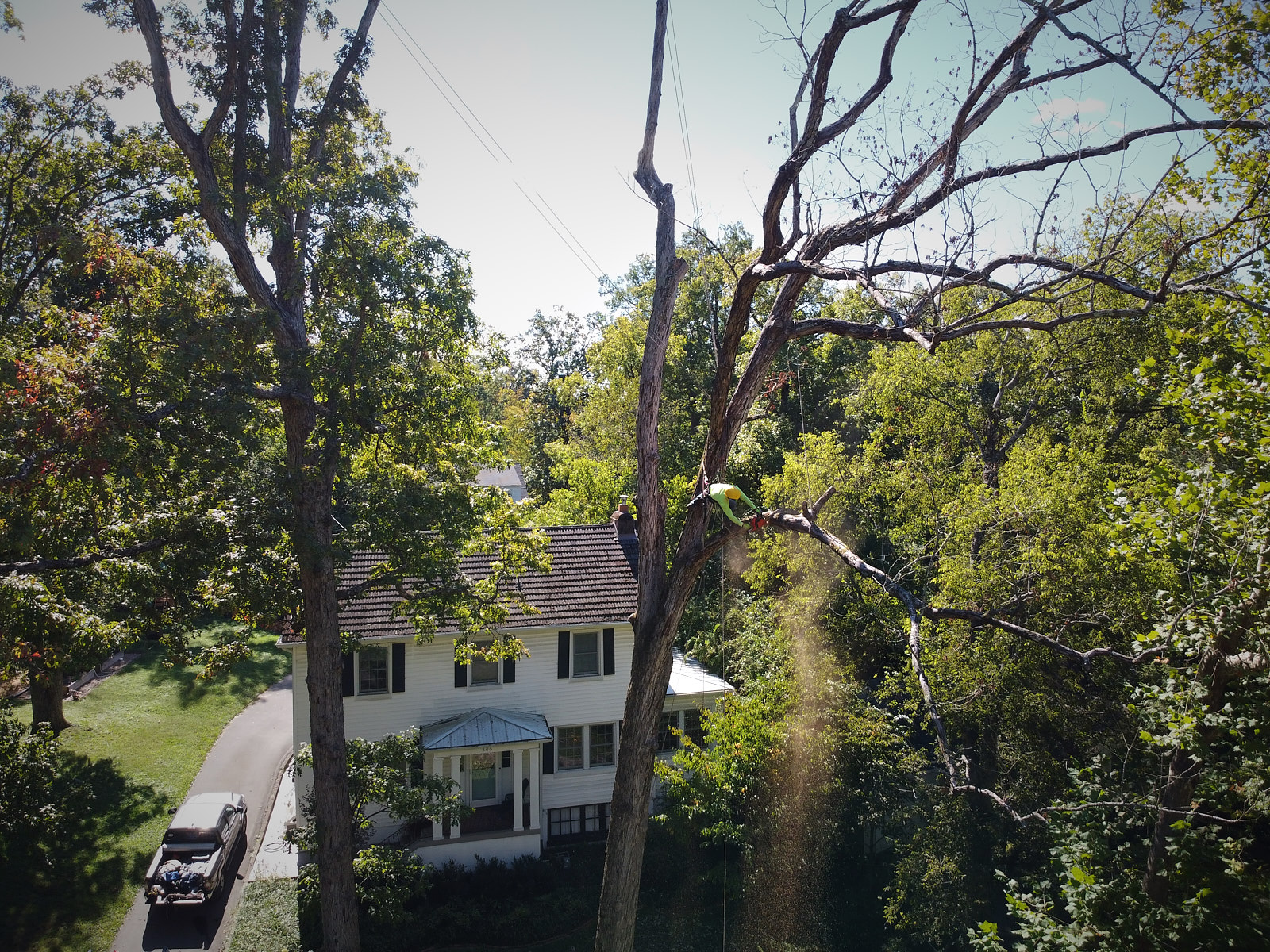 Professional Drone Photography for Tree Company.